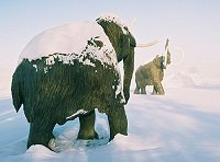 Mammoth statues guard the Beringia Museum in Whitehorse, Yukon, in an ice fog at -40 degrees