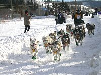 The start of the 1,000-mile Yukon Quest sled dog race in Whitehorse